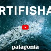 Artifishal – Ist Fischbesatz wirklich sinnvoll oder gibt es Nebenwirkungen?